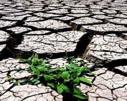 ABD'de kuraklık nedeniyle olağanüstü hal ilan edildi .12323
