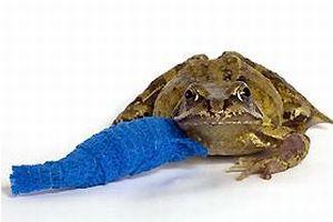 Kurbağa ve salyangoz siparişi arttı.10217