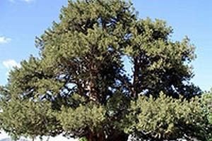 Doğayı korumak için 7 ağaç dikin.61647