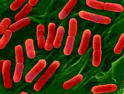 Çin'i sarsan virüs, dünyayı korkuttu.10550