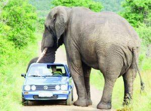 Arabanın tepesinde bir fil.18256
