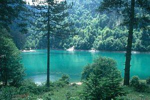 Abant gölüne 90 bin balık takviyesi.20597