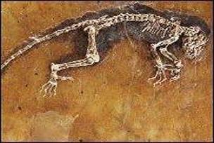 47 milyon yıllık fosil görücüye çıktı.16899