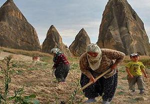 Peribacaları gölgesinde tarım.18612