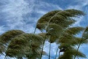 rüzgar önleyen ağaçlar ile ilgili görsel sonucu