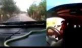 Seyir halindeki arabadan y�lan ��kt�